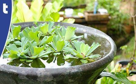 Mini vijver Van der Velde Waterplanten
