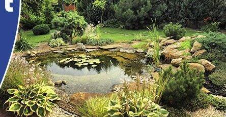 Natuurlijke vijver Van der Velde Waterplanten