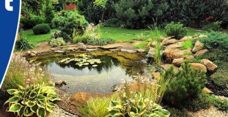 Van der Velde Waterplanten natuurlijke vijver