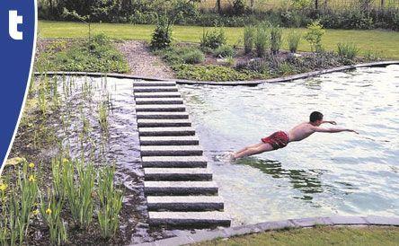 zwemvijver Van der Velde Waterplanten