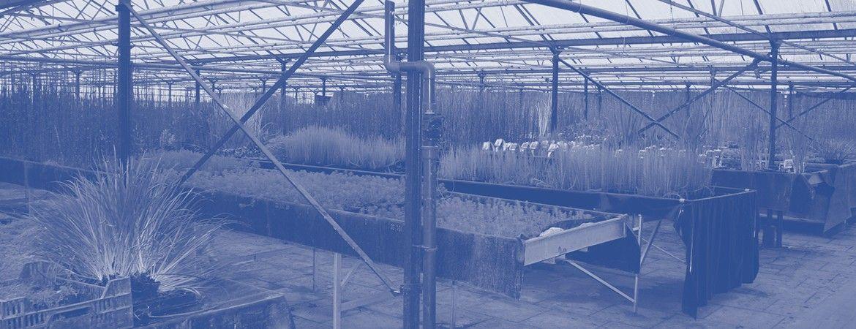 Simon van der Velde Waterplanten kwekerij