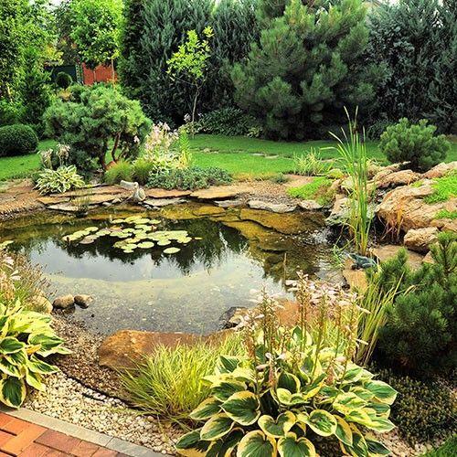 Van der Velde Waterplanten advies vijverplanten