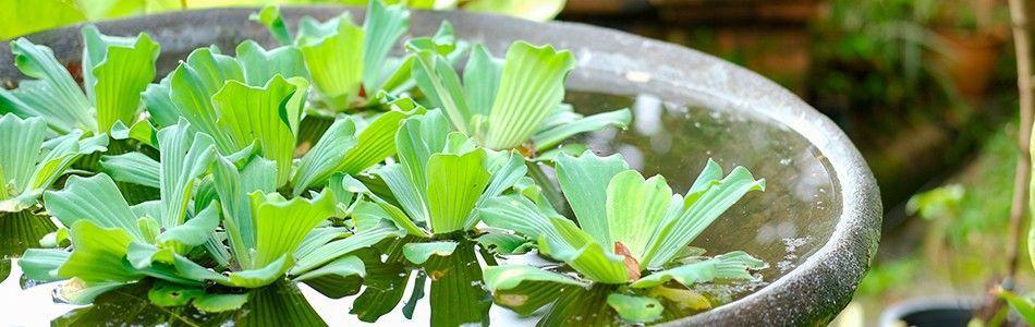 Van der Velde Waterplanten assortiment drijfplanten