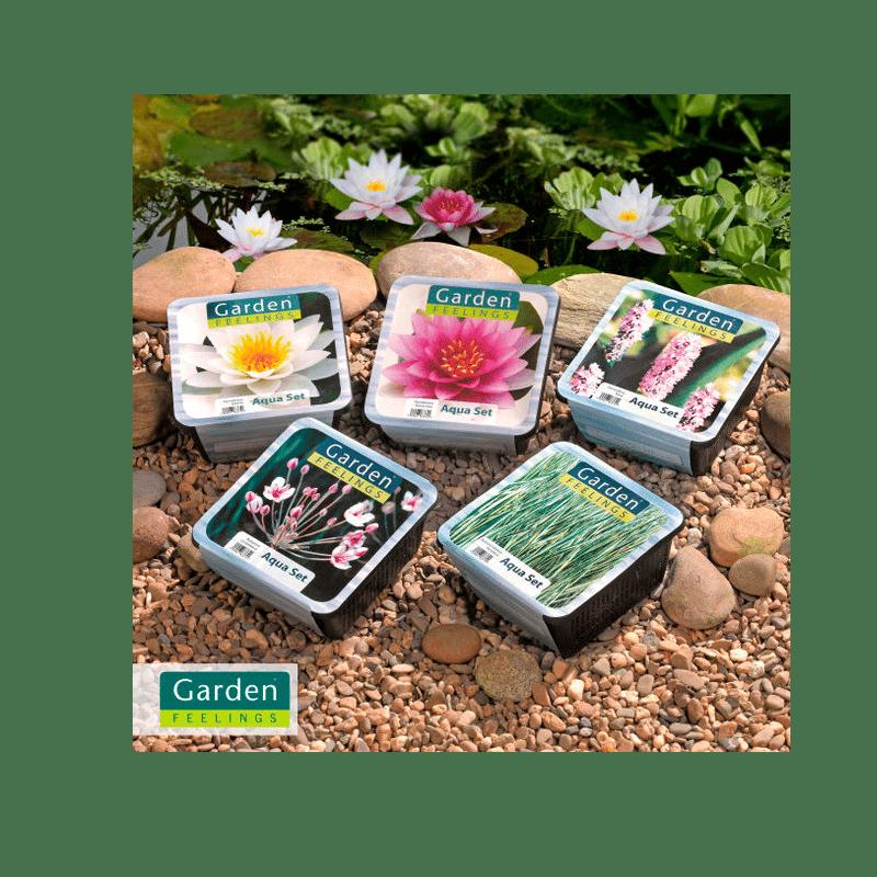 Van der Velde Waterplanten private labeling