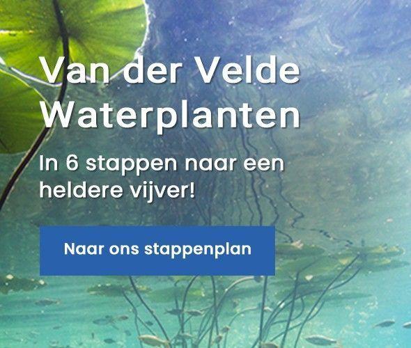 Van der Velde Waterplanten stappenplan heldere vijver