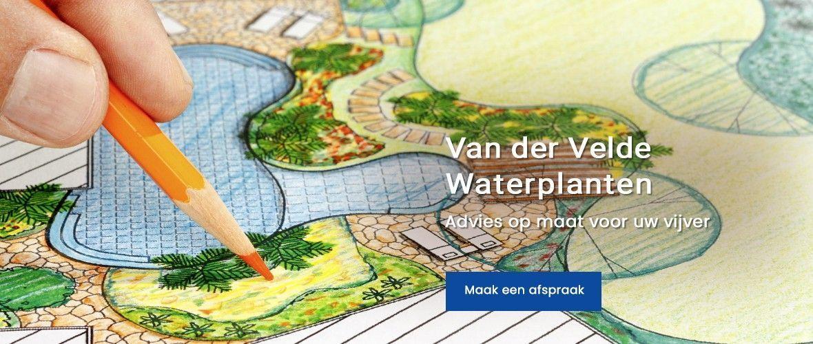 Van der Velde Waterplanten advies op maat vijver