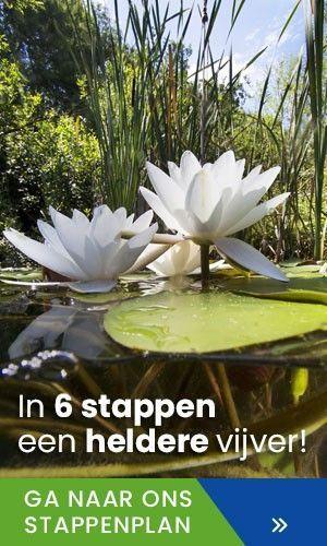 Simon van der Velde stappenplan heldere vijver
