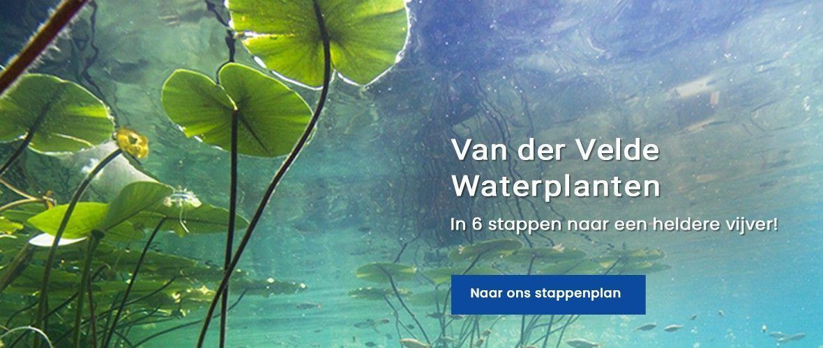 Van der Velde Waterplanten stappenplan