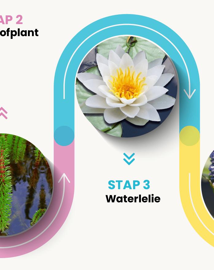 Van der Velde Waterplanten stappenplan vijver