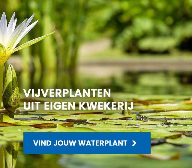 Van der Velde Waterplanten assoritiment