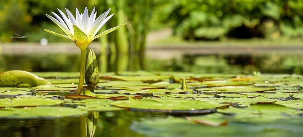Van der Velde Waterplanten