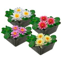 Mix van 4 winterharde waterlelies met grote bloemen en bladeren. Te planten op een diepte van maximaal -1.00 meter. Geleverd inclusief vijvermandje (19x19x10 cm)