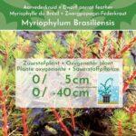 Manden-Zuurstofplanten-Pakket-3