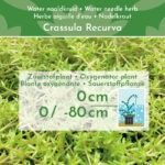 Manden-Zuurstofplanten-Pakket-4