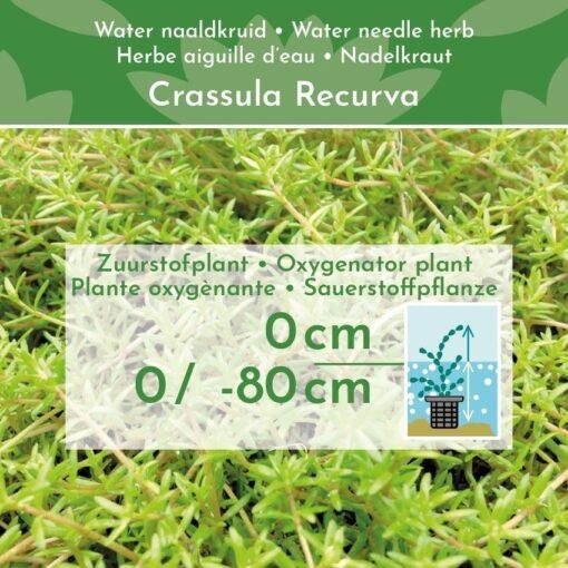 Dit waterplanten pakket bevat: 12 winterharde zuurstofplanten