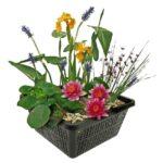 Mini Vijver Planten Pakket – Multi   Vijverplanten Pakketten   VanderVeldeWaterplanten.nl