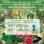 Mini-Vijver-Planten-Set-Multi-3