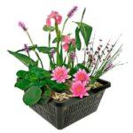 Mini Vijver Planten Pakket – Roze   Vijverplanten Pakketten   VanderVeldeWaterplanten.nl