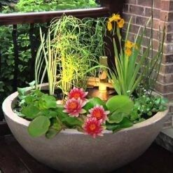 1 zuurstofplant 1 moerasplant en 1 waterplant. Geleverd inclusief vijvermandje (19x19x10 cm)