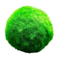 Mosbal is een winterharde zuurstofplant en kan maximaal een diameter van 10 cm krijgen. Geschikt voor vijver en aquarium. Kan direct zonder te planten het water in.