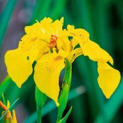 5 voordelen van losse filterplanten: