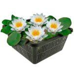 Witte Waterlelie  Waterlelies   VanderVeldeWaterplanten.nl